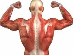 Ученые: Найден оптимальный способ увеличения мышечной силы человека