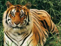 Ученые назвали животных, которые вымрут к 2100 году