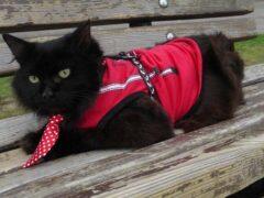 В Госдуму от Костромы идет кот Бегемот