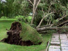 В Москве во время грозы на женщину упало дерево
