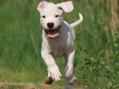 В Красноярске на 60 тысяч рублей хозяин застраховал собаку