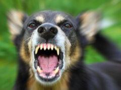 Собака загрызла полуторагодовалую девочку в Челябинской области