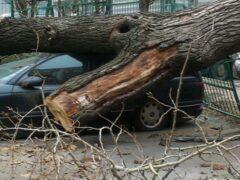 В Москве из-за сильного дождя и ветра упали четыре дерева