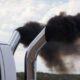 ЕС введет ограничения на выбросы углекислого газа грузовыми автомобилями