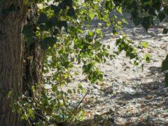 В Туле полусгнивший труп в кустах обнаружили дачники