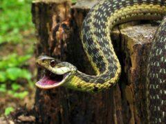 В Воронеже возле подъезда дома поймали змею