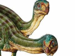 Ученые обнаружили четырехкрылого динозавра