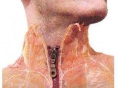 Ученые разработали новый метод выращивания кожи