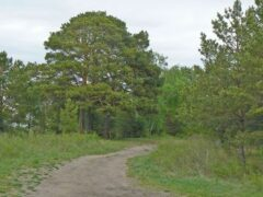 В лесу Прикамья нашли скелет пожилой женщины