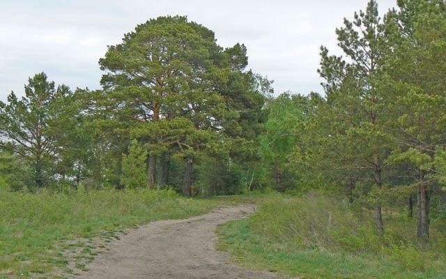 лес Прикамье