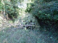 В Ивановской области ночью волонтеры спасали заблудившихся в лесу людей