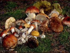 В Краснодаре грибами отравилась многодетная семья