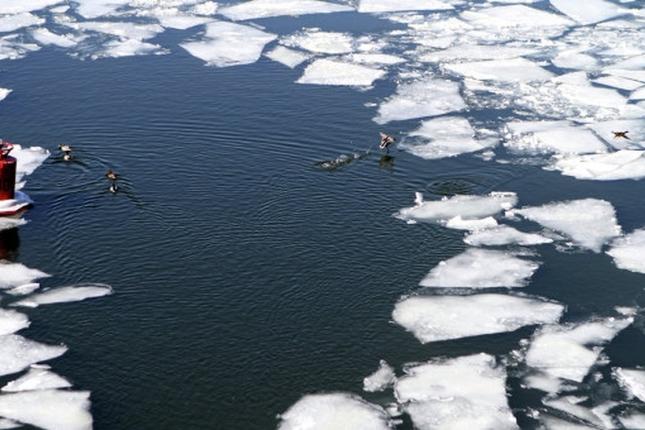 река лед полынья