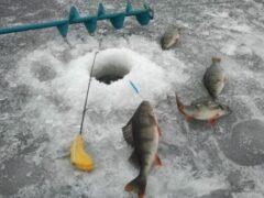 В Ростовской области рыбак провалился под лед и утонул