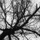 В Пензе в арбековском лесу нашли тело 25-летнего парня