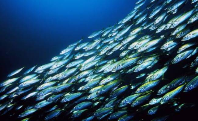 океан рыба