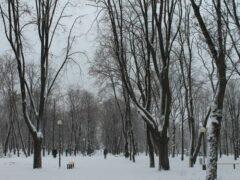 Во Владимире облитого водой котенка выгнали на мороз