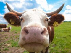 В Петербурге на улице Димитрова нашли отрубленные коровьи головы