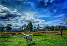 __Россия природа коза деревня