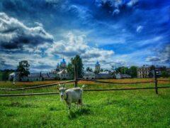 «АгриВолга» создаст новый сырный кластер в Ярославской области