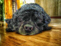 В Курском районе кражу помогла раскрыть служебная собака