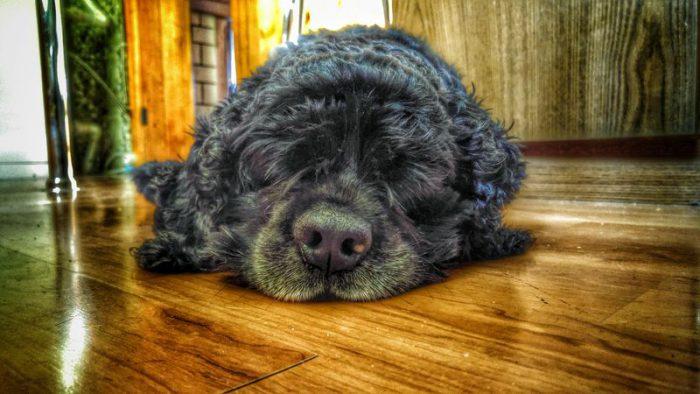 __ собака спит на полу