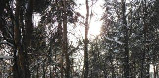__лес