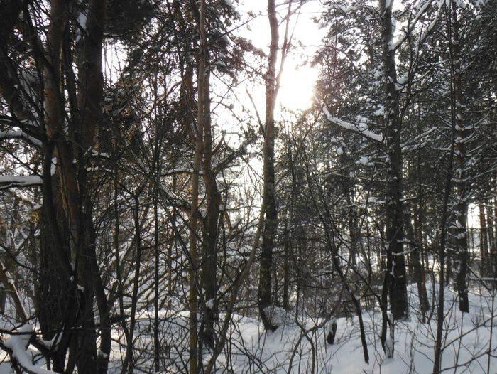 ВУфе cотрудники экстренных служб отыскали замерзающих влесу молодого человека идевушку