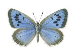 Британского коллекционера признали виновным в убийстве бабочки