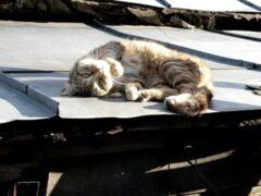 В Ярославле прошла спецоперация по спасению «мартовского» кота