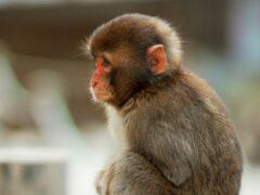 В Сочи уличный фотограф уличен в жестоком отношении к обезьянке