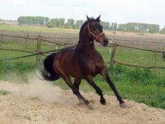 В Татарстане 11-летняя девочка погибла, упав с лошади