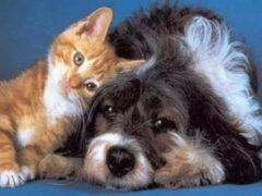На Тайване запретили убивать кошек и собак ради мяса
