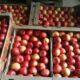 Под Воронежем задержали рецидивистов, похитивших 300 килограммов яблок