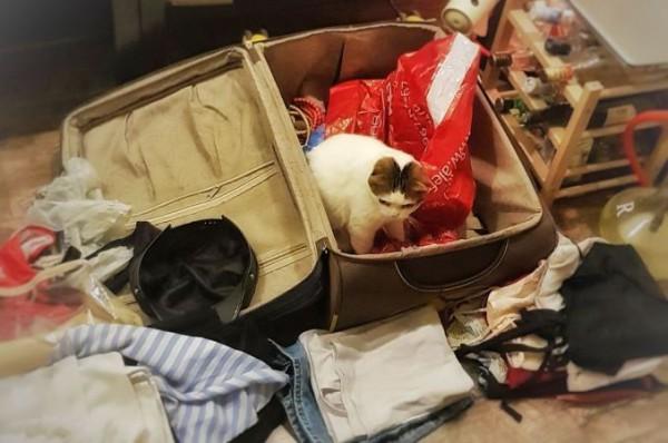 __туризм, чемоданы, поездка