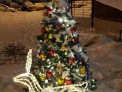 В Барнауле неизвестный срубил наряженную елку во дворе дома