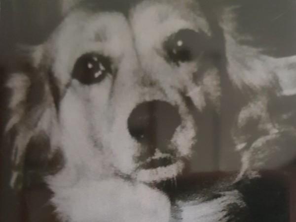 __собака