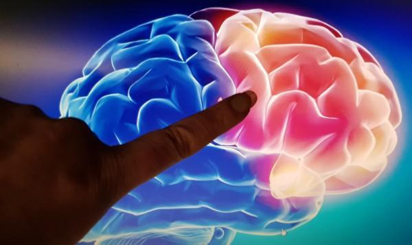 __мозг