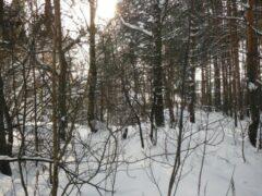 Острый соус спас жизнь потерявшимся в снегах американцу и его собаке