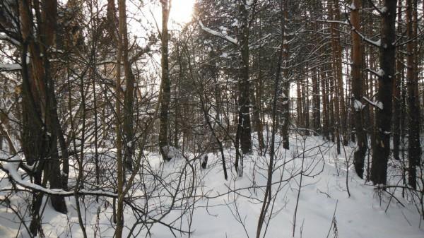 __зима, снег, деревья