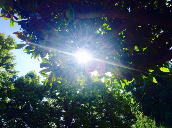 __солнце деревья лес