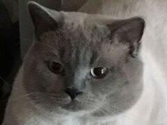 В Озерске кошка Маруся отводит и встречает ребенка из школы