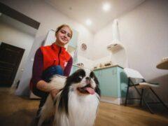 Дневная няня для собаки: все будут довольны